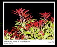 6种lightbox(灯箱)图片展示效果源代码下载